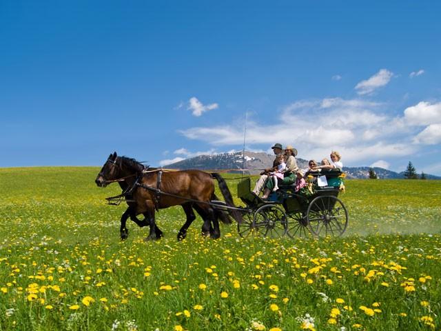 Фото лошадей абтенайской породы гнедой масти