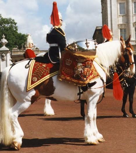 Фото лошади породы драмхорс рыже-пегой масти
