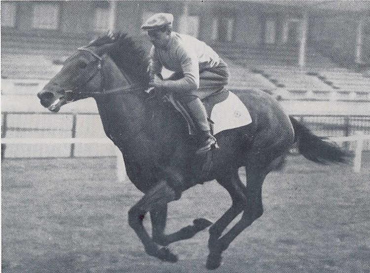 Фото лошади по кличке Рибо (Ribot)