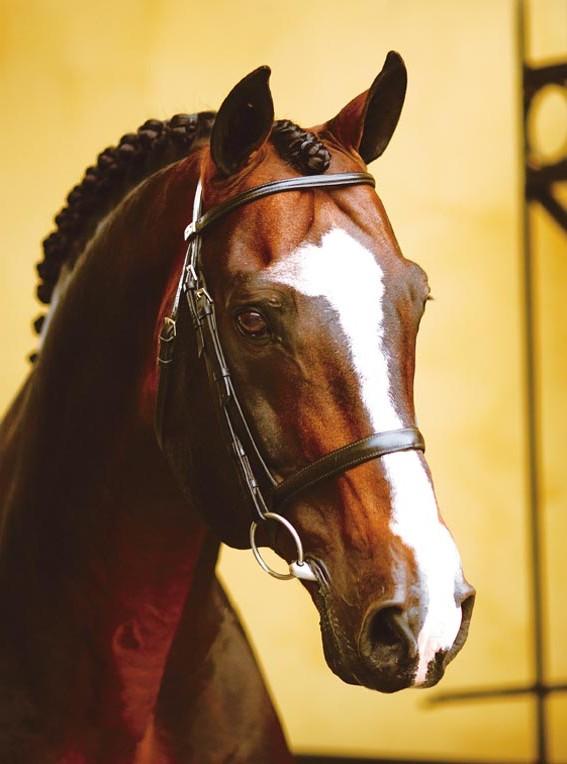 Фото лошади по кличке Робин IZ (Robin IZ)