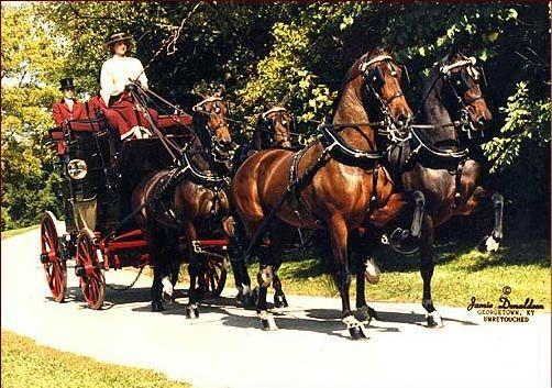 Фото лошадей породы хакне