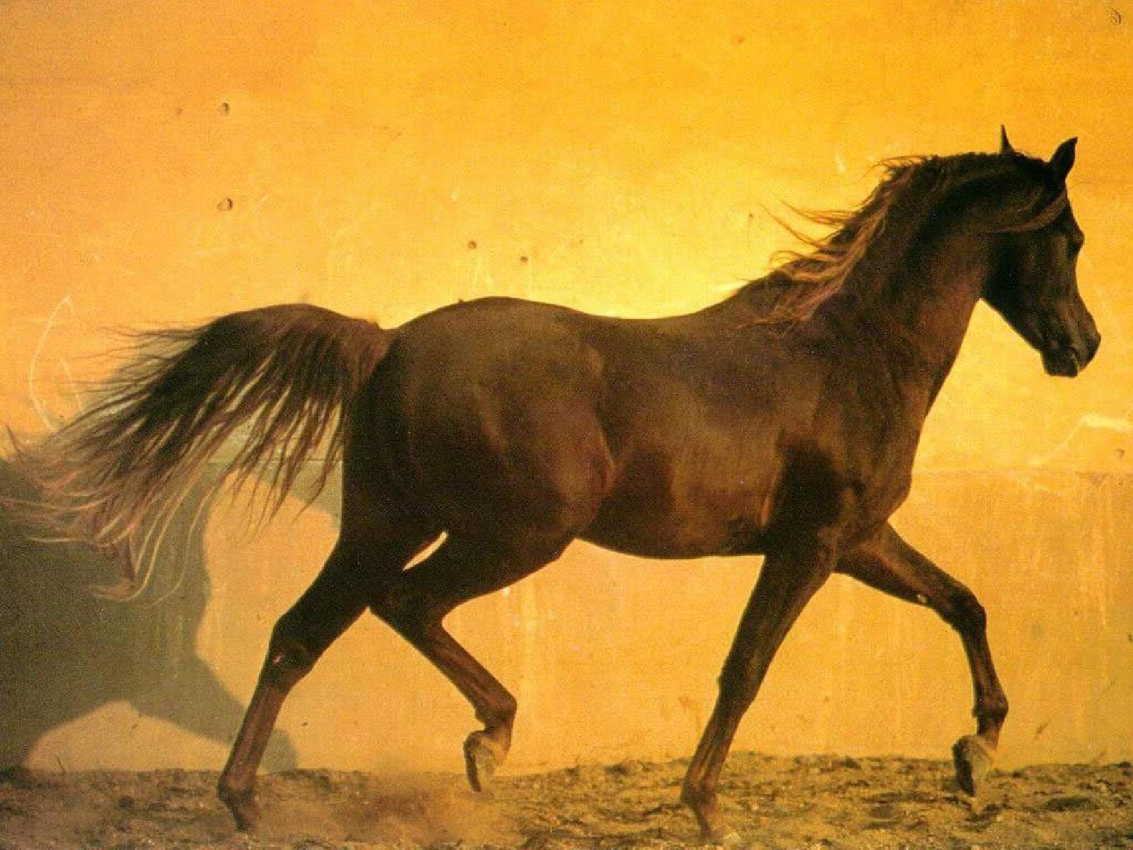 Работа с неподготовленной лошадью скачать