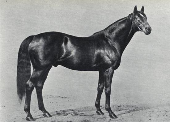 Фото лошади по кличке Сент Саймон (St. Saimon)