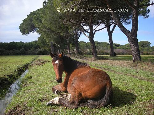 Фото лошади породы мареммано гнедой масти