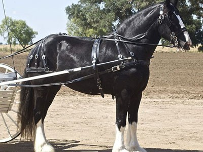 http://kohuku.ru/uploads/posts/2012-03/1331922338_americas-unemployed-the-draft-horses-of-the-21st-century.jpg