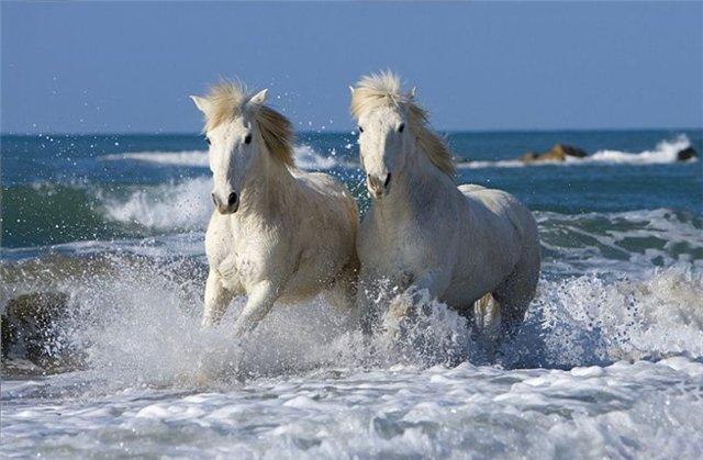 http://kohuku.ru/uploads/posts/2012-03/1332360985_8a7bf609f9f9.jpg