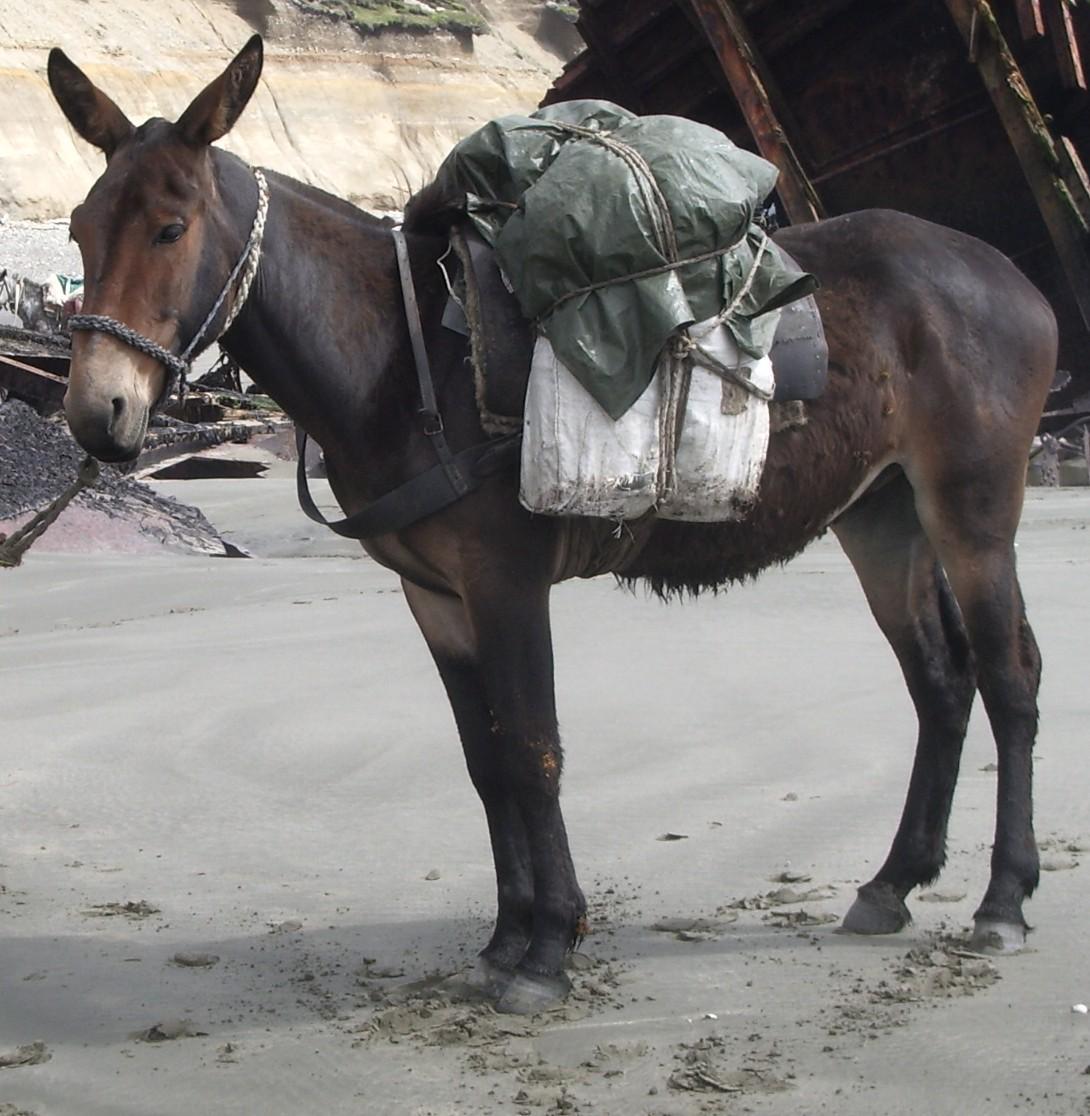 Секс с мулами и ослом 12 фотография