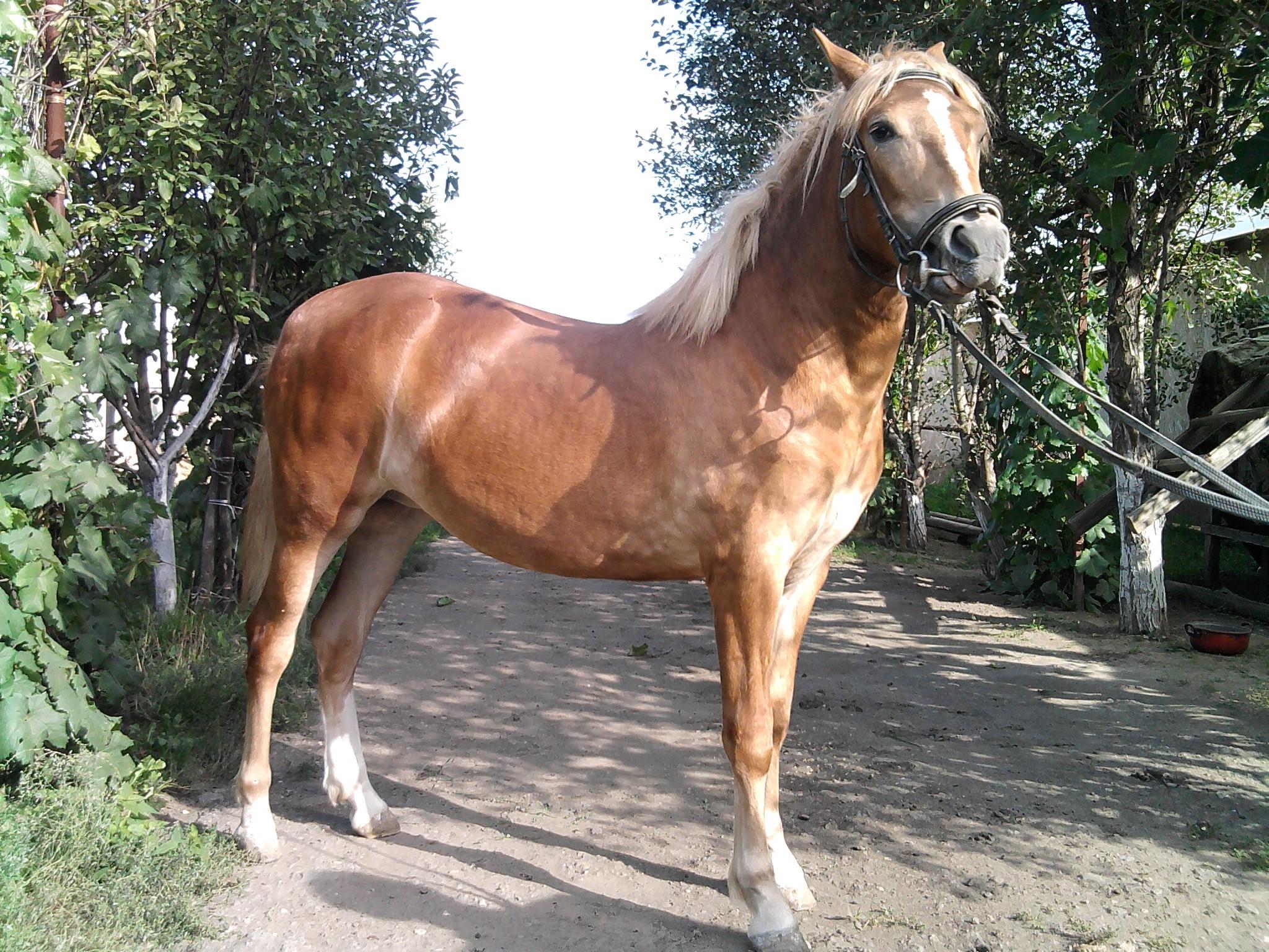 башкирская порода лошадей фото