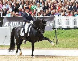Фото лошади голландской теплокровной породы вороной масти