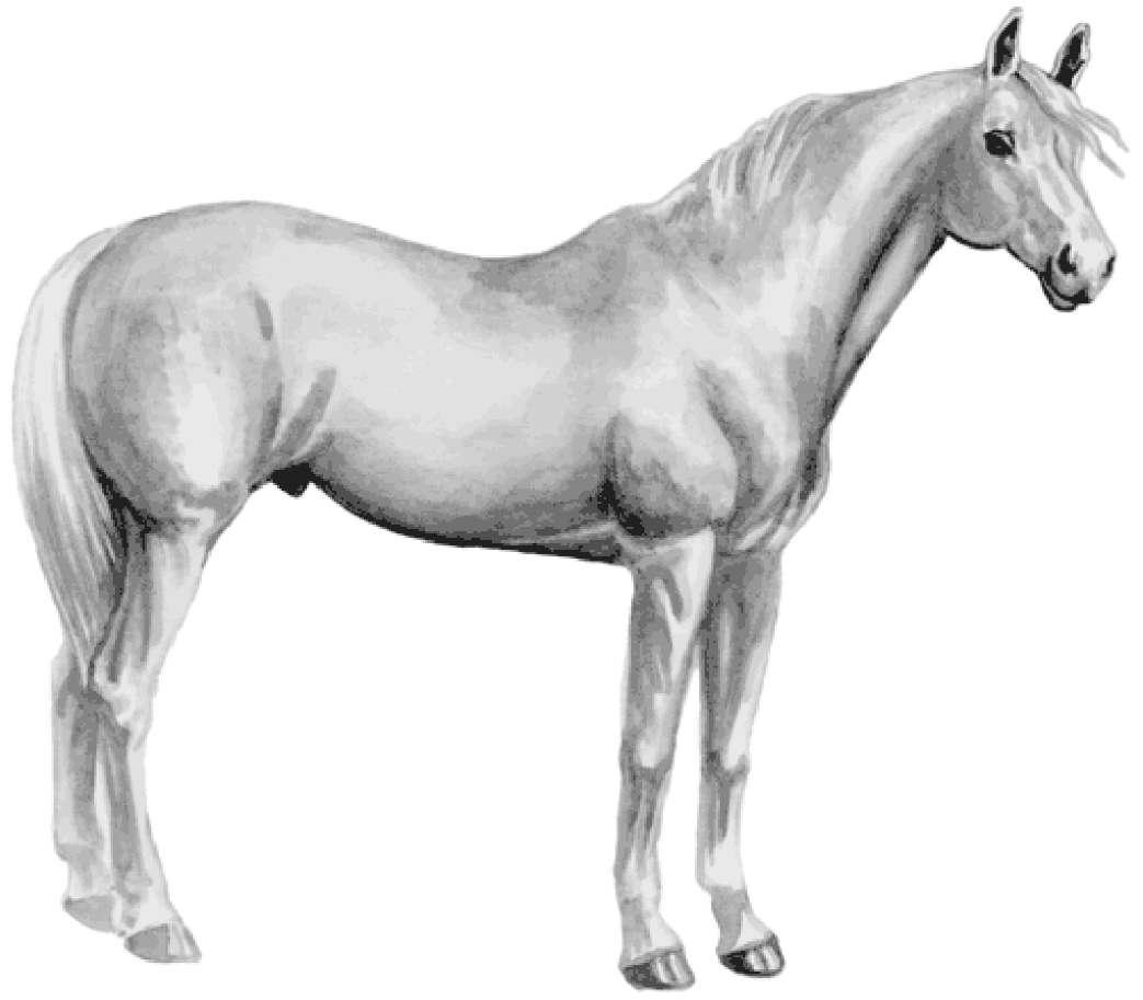 Рисунок лошади терской породы серой масти