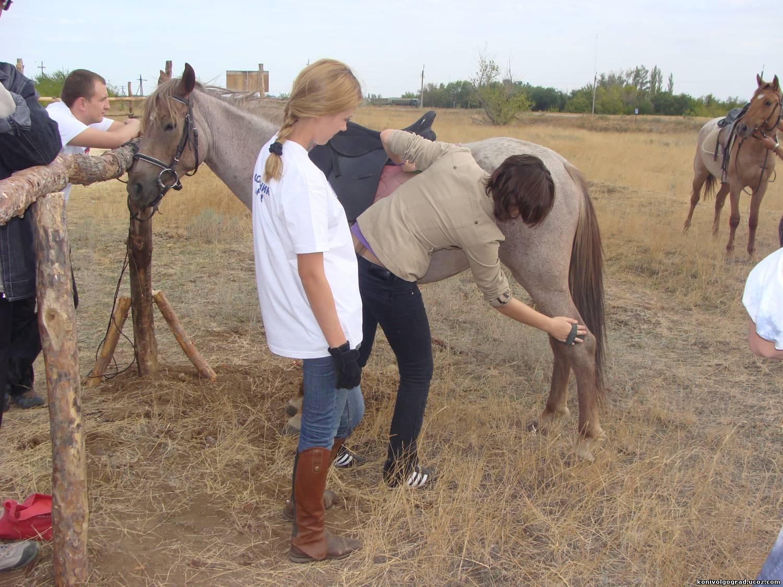 Фото чистки лошади чалой масти