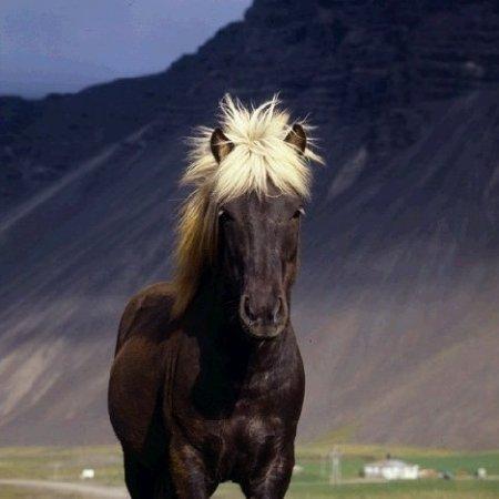 Как ты думаешь какого цвета шерсть у лошади вороной масти почему