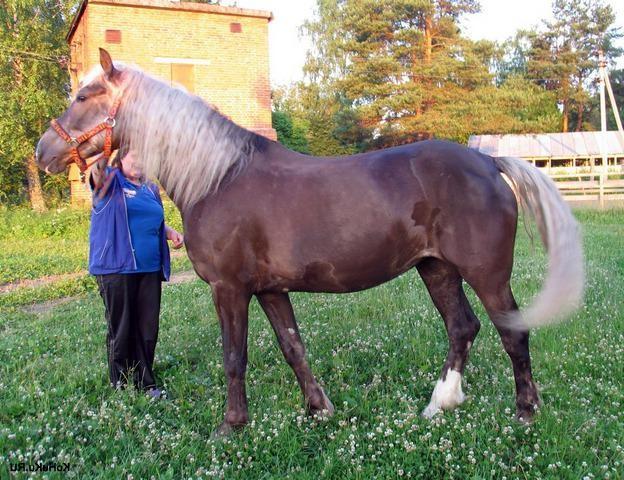 Фото лошади игреневой масти