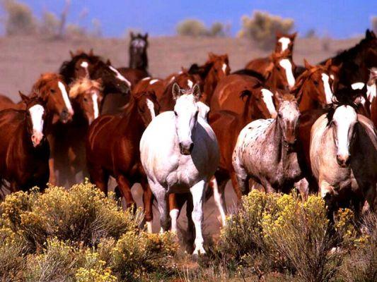 Масти диких лошадей