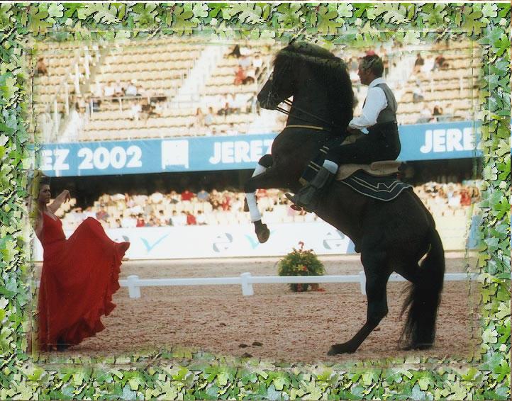 Фото испанской чистокровной лошади