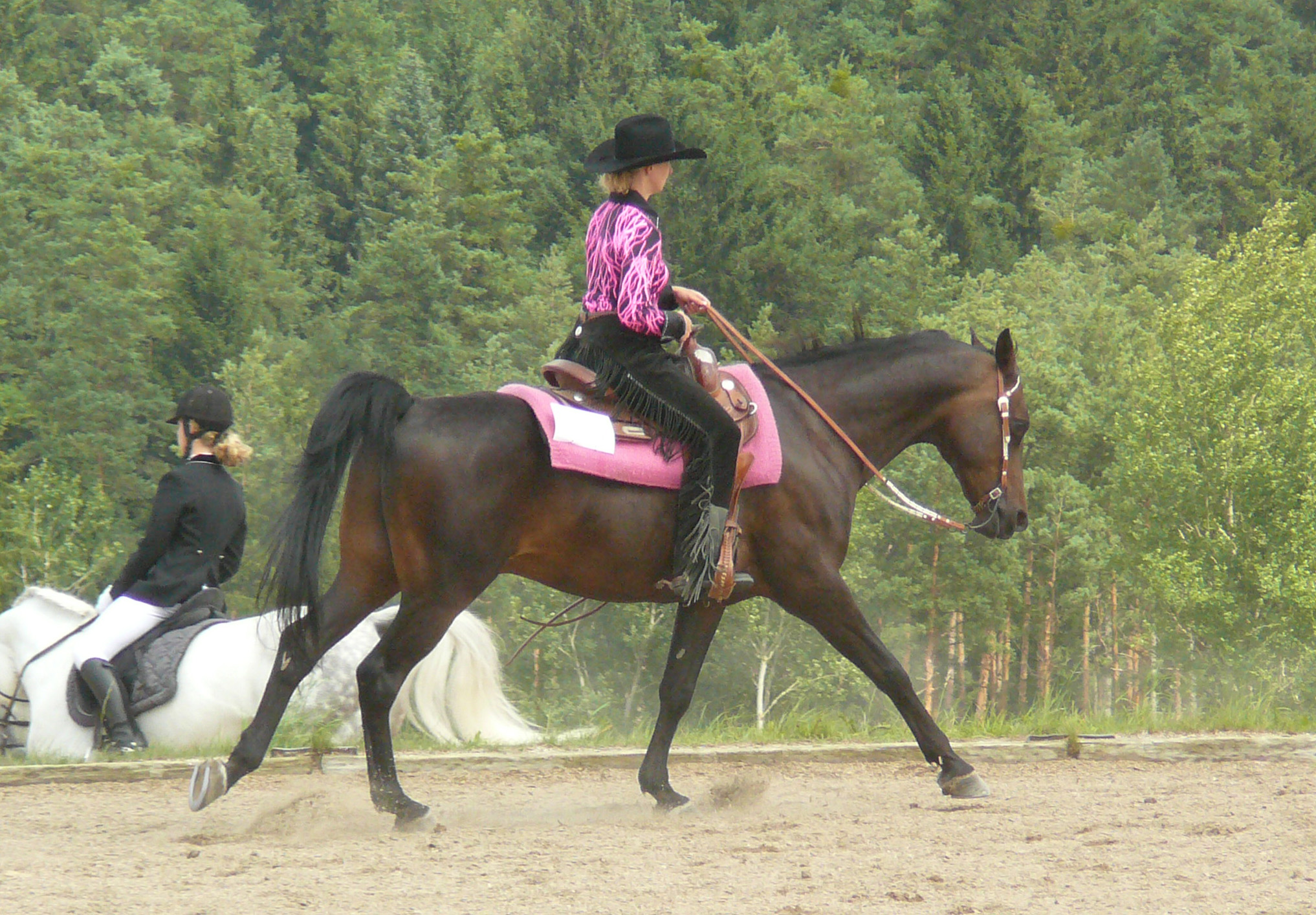 Фото лошади породы шагия араб гнедой масти