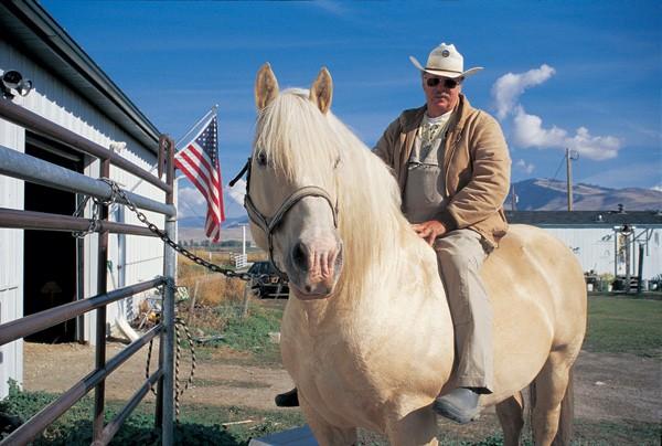 Фото американской кремовой лошади