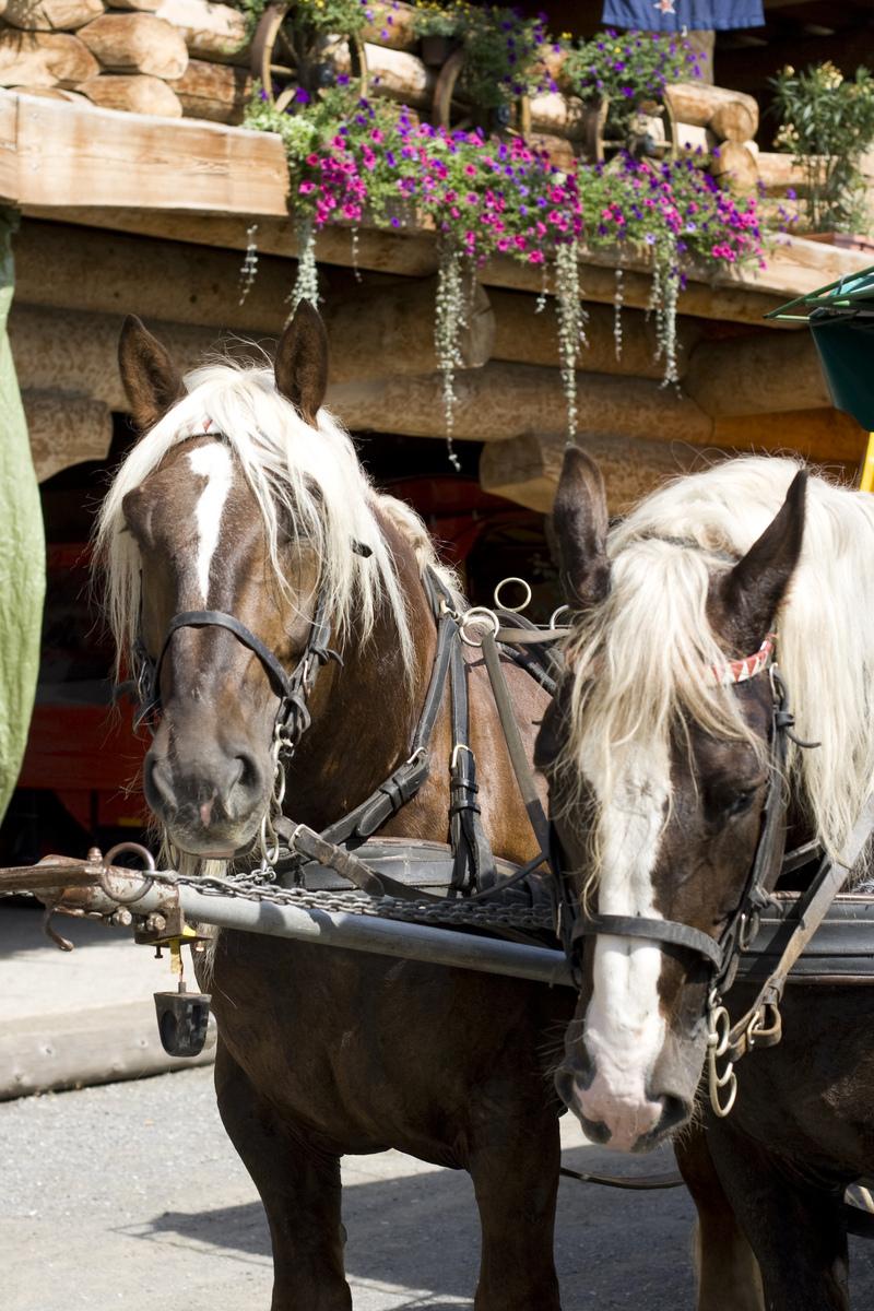 Лошади южно-германской породы