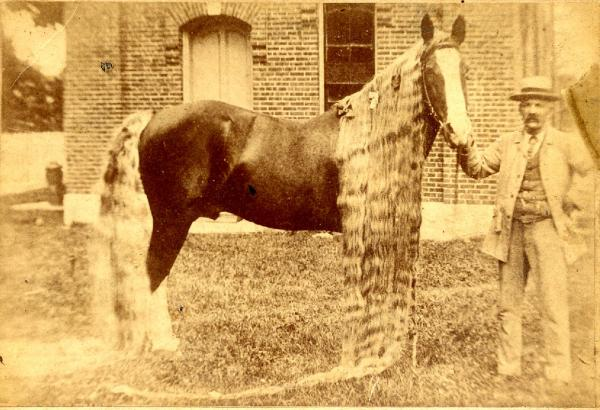 Фото Линуса - самой длинногривой и длиннохвостой лошади