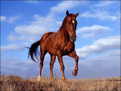 Фото рыжей лошади