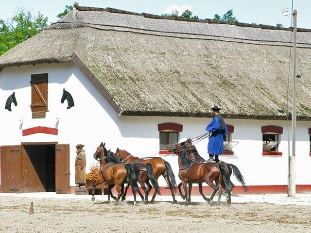 Фото лошадей дунайской породы гнедой масти