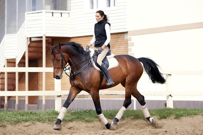 Баварская теплокровная лошадь
