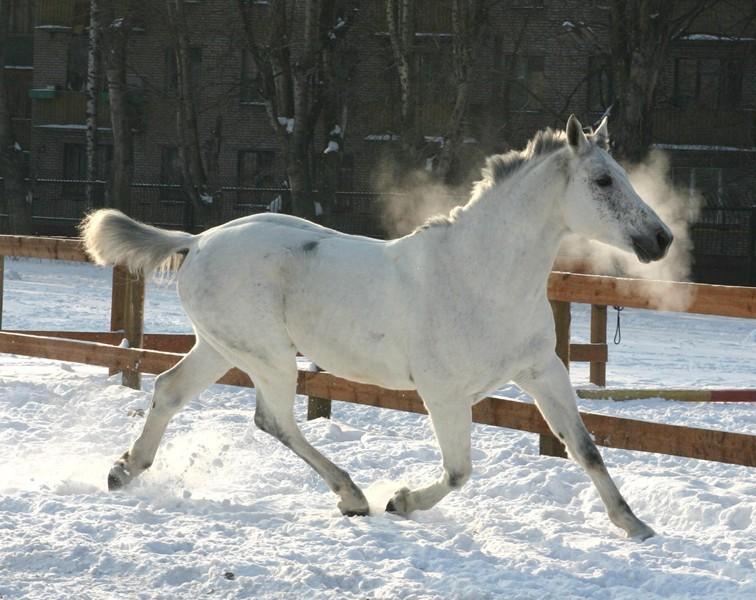 Лошадка зимой