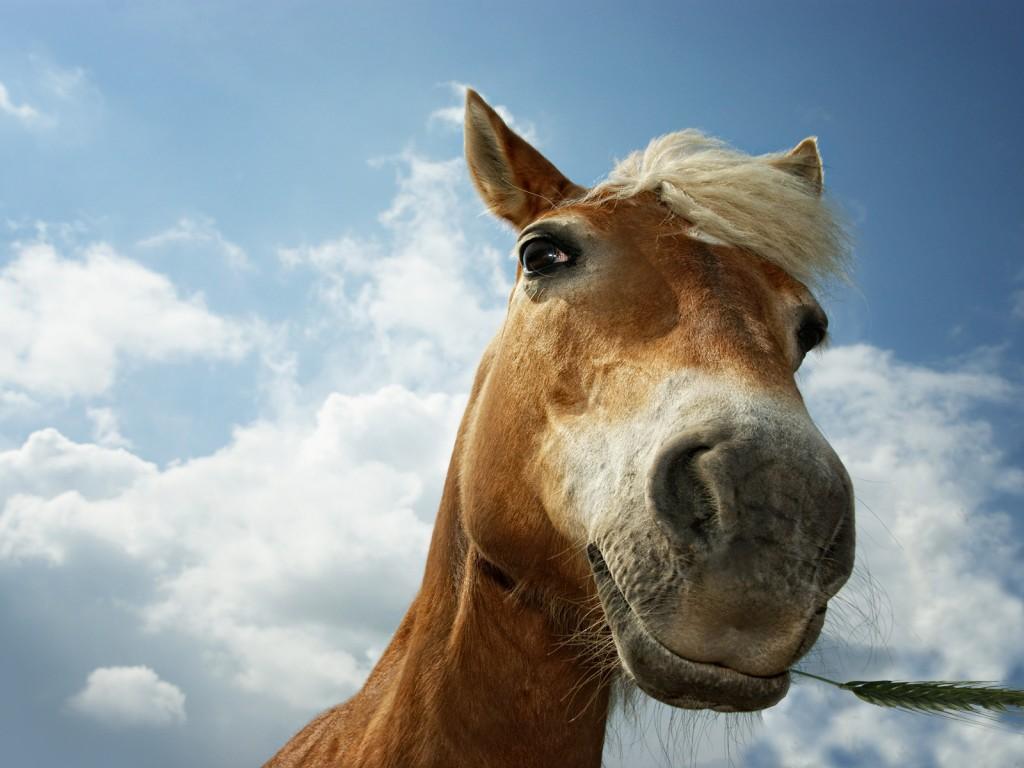 http://kohuku.ru/uploads/posts/2012-07/1342462946_animals_horses_horse_muzzle_025102_.jpg