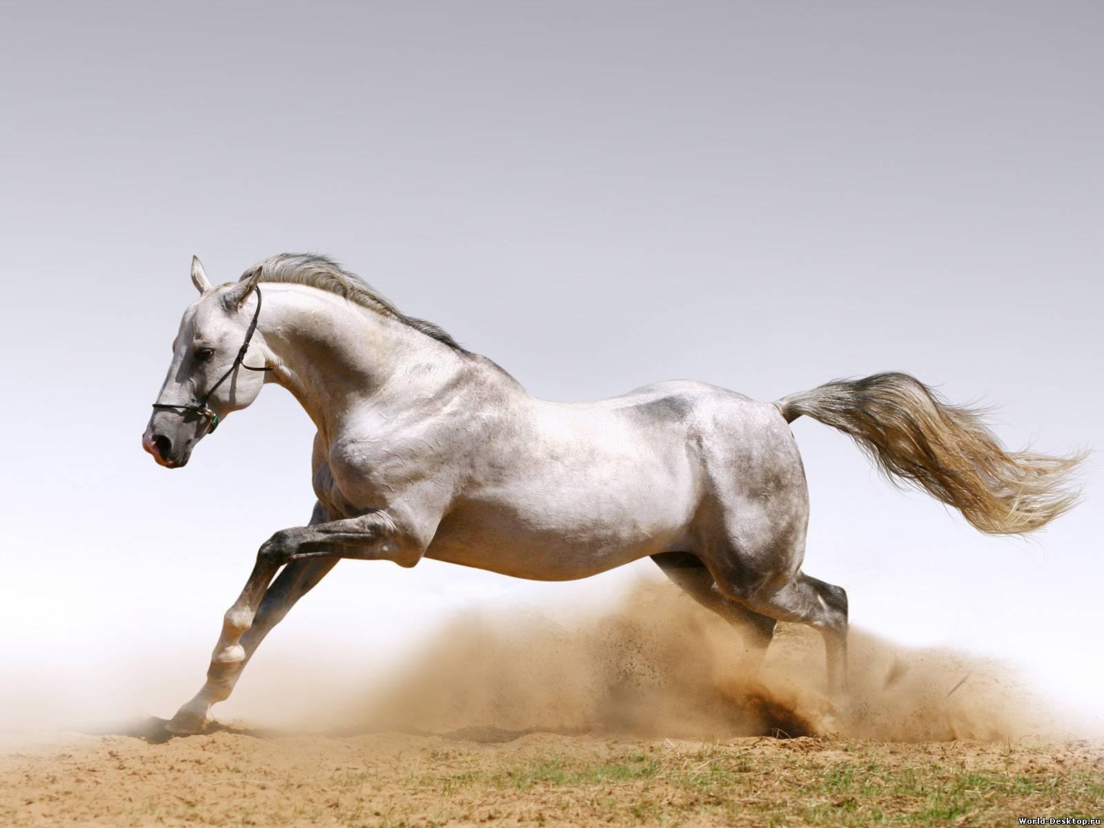 День лошади отметят в улан удэ