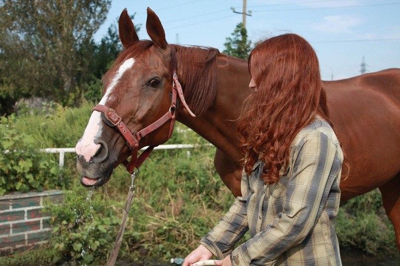 порно с конем 3 д фото