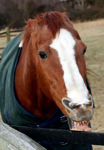 Стих про рыжих коней