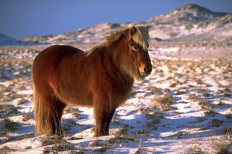 южные лошади фото