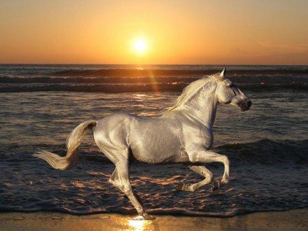 Фото белой лошади