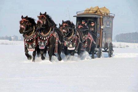 Фото вороных лошадей