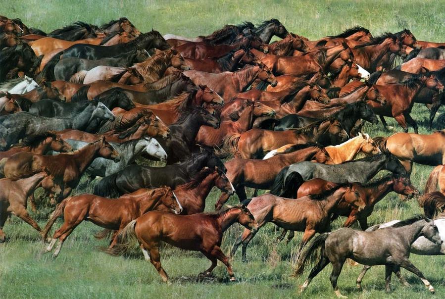 обычного к чему сниться стадо коней Николаевна