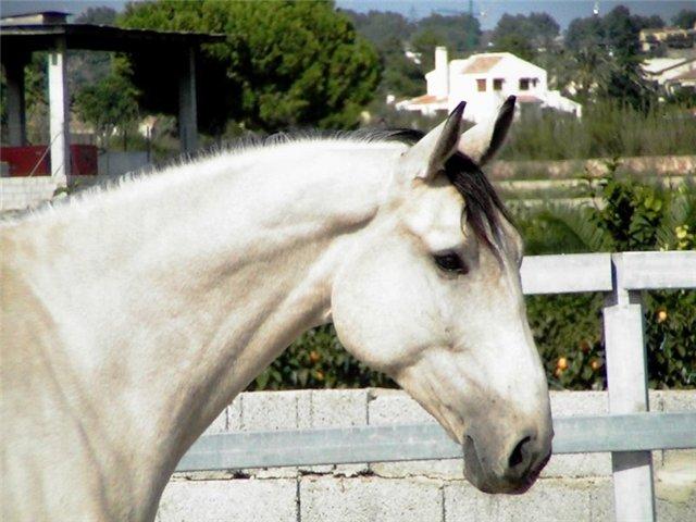 лошади породы фото