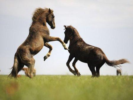 Дикие лошади с острова Водный
