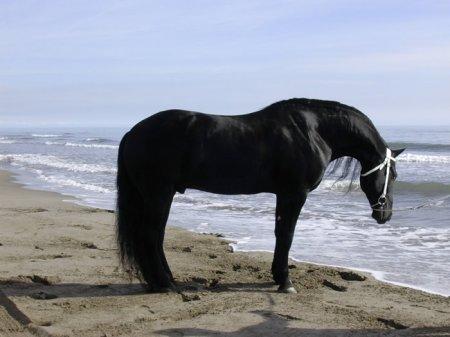 Доверие лошади