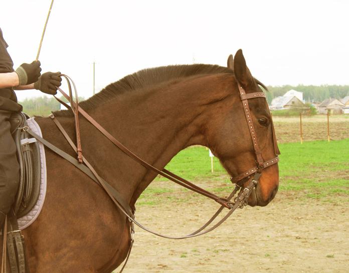 Вожжи для лошадей своими руками