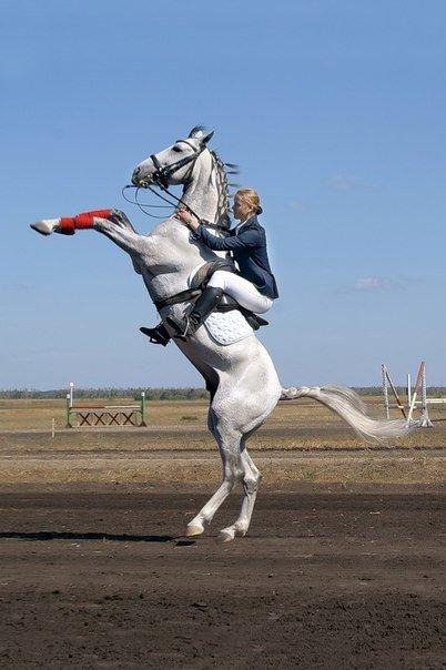 Теоретическое обучение обращению с лошадьми и