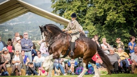 Shire horse riding