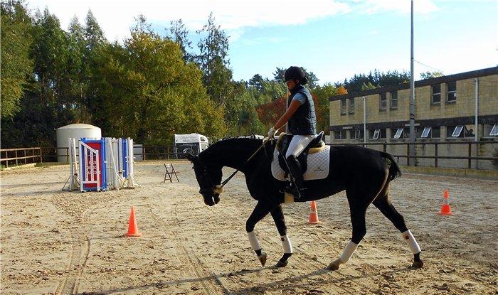 тренировки на лошадях фото
