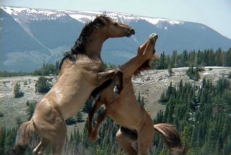 Интересную Игру Про Лошадей