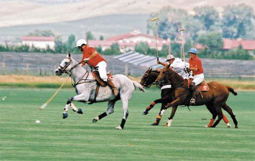конное поло фото