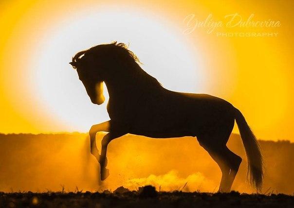 Суставов конечностей лошади в тазу болит сустав