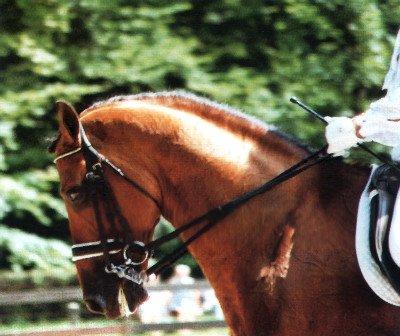 Лошадь с мундштруком