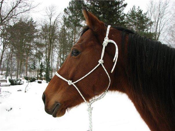 Как сделать веревочный недоуздок для лошади