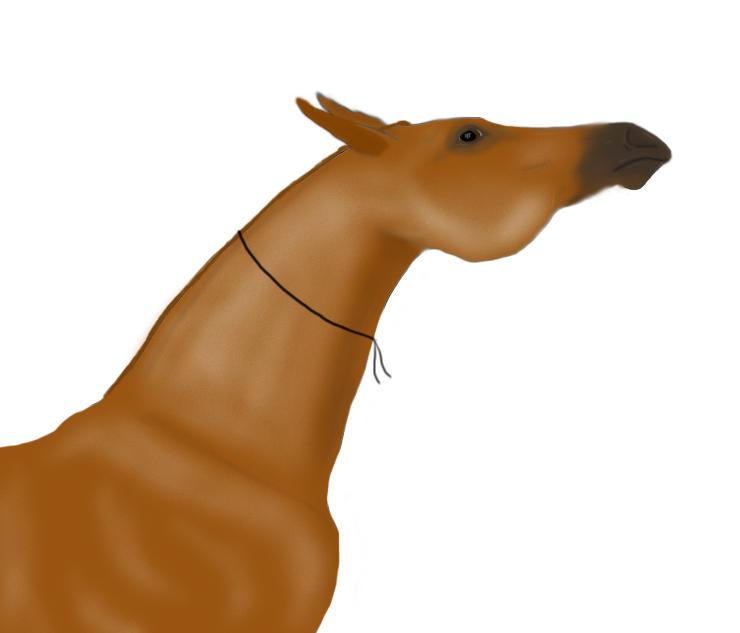 конь боевой фото